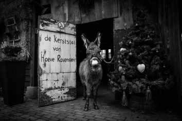 tamar-koppel-fotografie-dieren-4