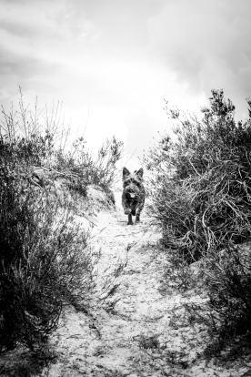 tamar-koppel-fotografie-dieren-6