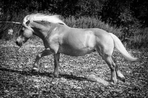 tamar-koppel-fotografie-dieren-8